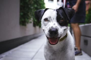 O que você precisa saber sobre animais em condomínio?