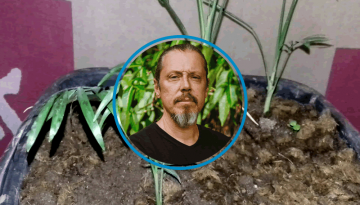 Por que as minhas plantas não crescem?